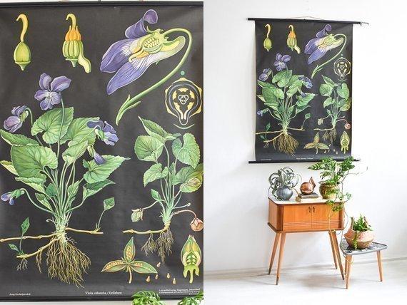 Mid Century Modern Botanical Chart 60s Industrial School Poster