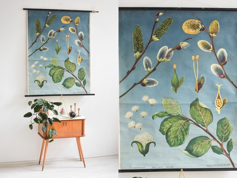 Mid Century Botanical Wall Art From The 1960s