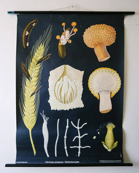 N-2 Mushroom Poster Chart Education Fungus Botany Wall Decor