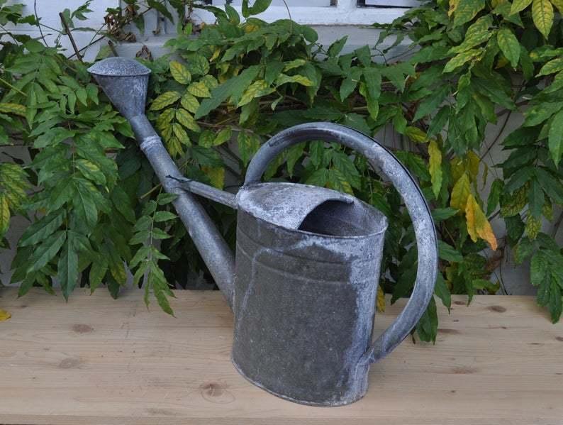Galvanized Watering Can Vinterior