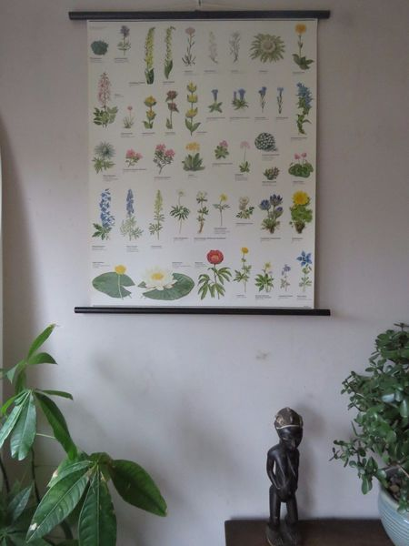 Vintage Pull Roll Down Botanical School Wall Chart Poster Of Flowering Plants