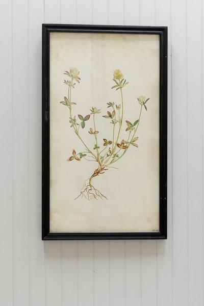 Timothy Oulton Botanical Print